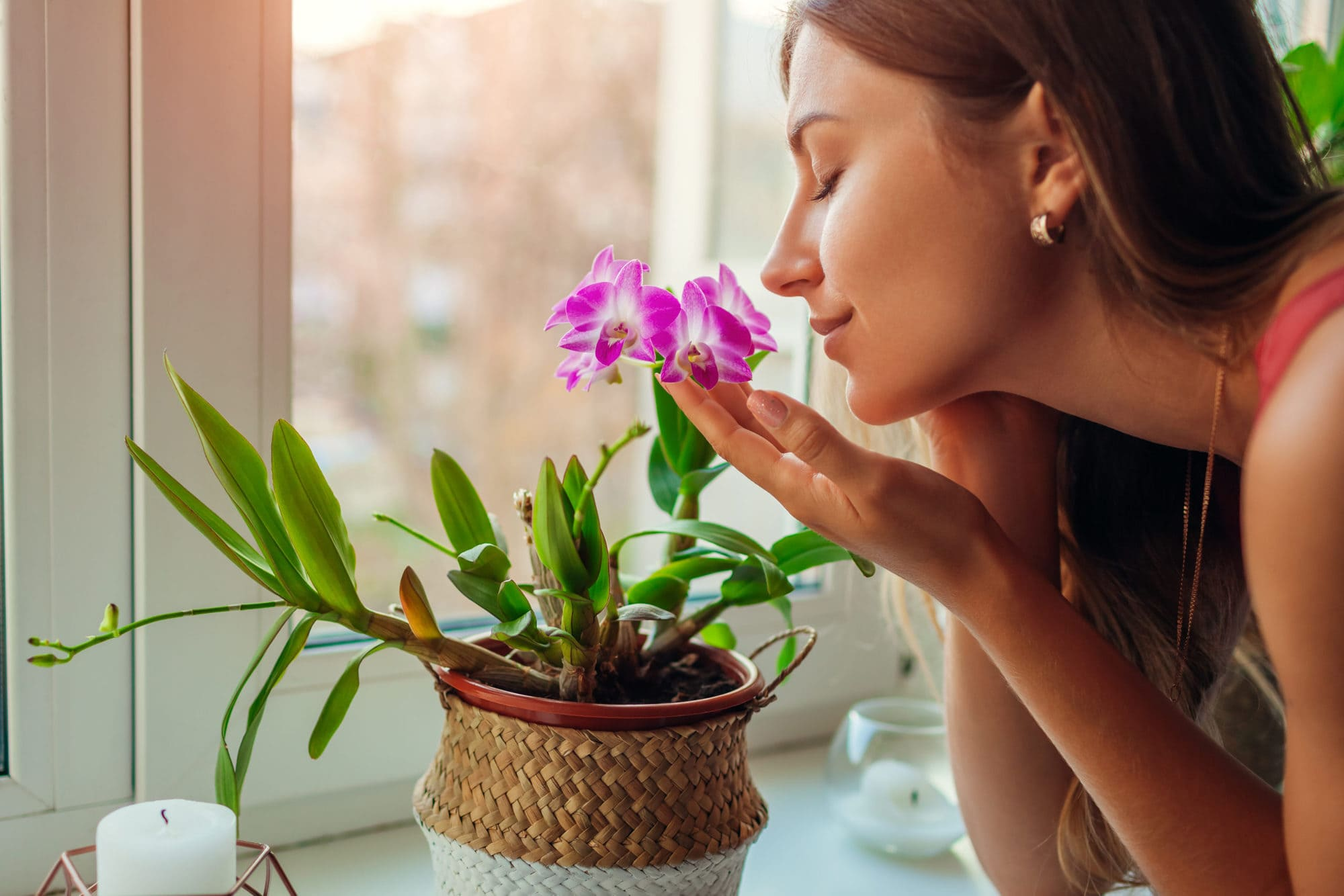 Woman smelling dendrobium orchid on window sill. Happy housewife taking care of home plants and flowers.